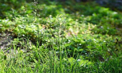 描写野草的现代诗歌-野草