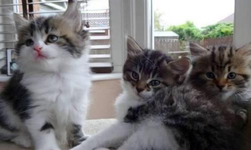 原创现代诗歌三首-摆渡、星星的梦、三只小猫