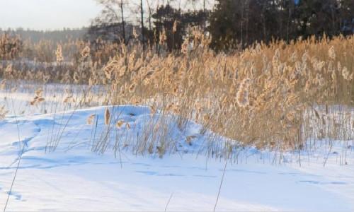 下雪的诗歌-下雪了吗