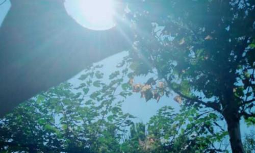 虬髯客诗歌四首-像一枚枯草,在青樟树下、相见欢、热爱、白鹭