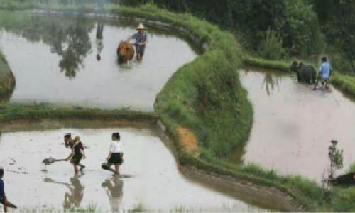 海子的诗-农耕民族
