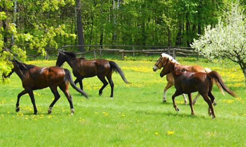 尚仁的诗歌-牝马和牡马