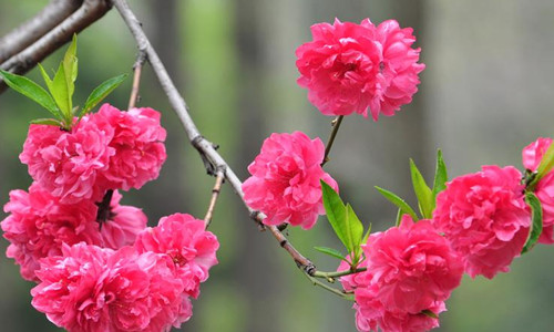 尚仁的诗歌-火和桃花