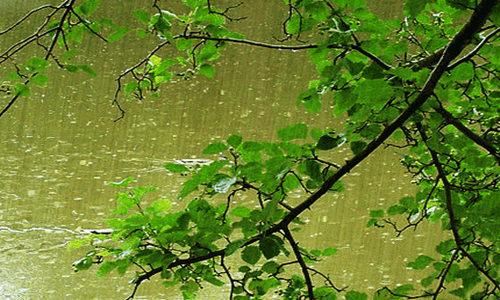 [蒋然] 诗歌投稿作品-初夏的雨