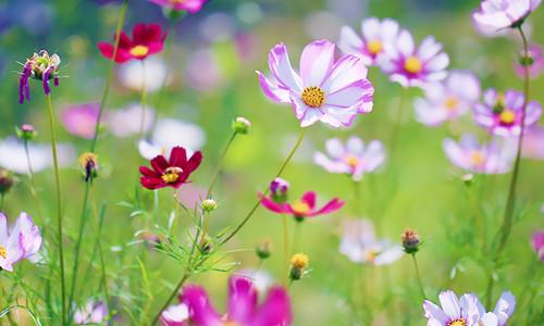 [郑逸] 五月之歌、沉默、诗歌之神、一日、表妹